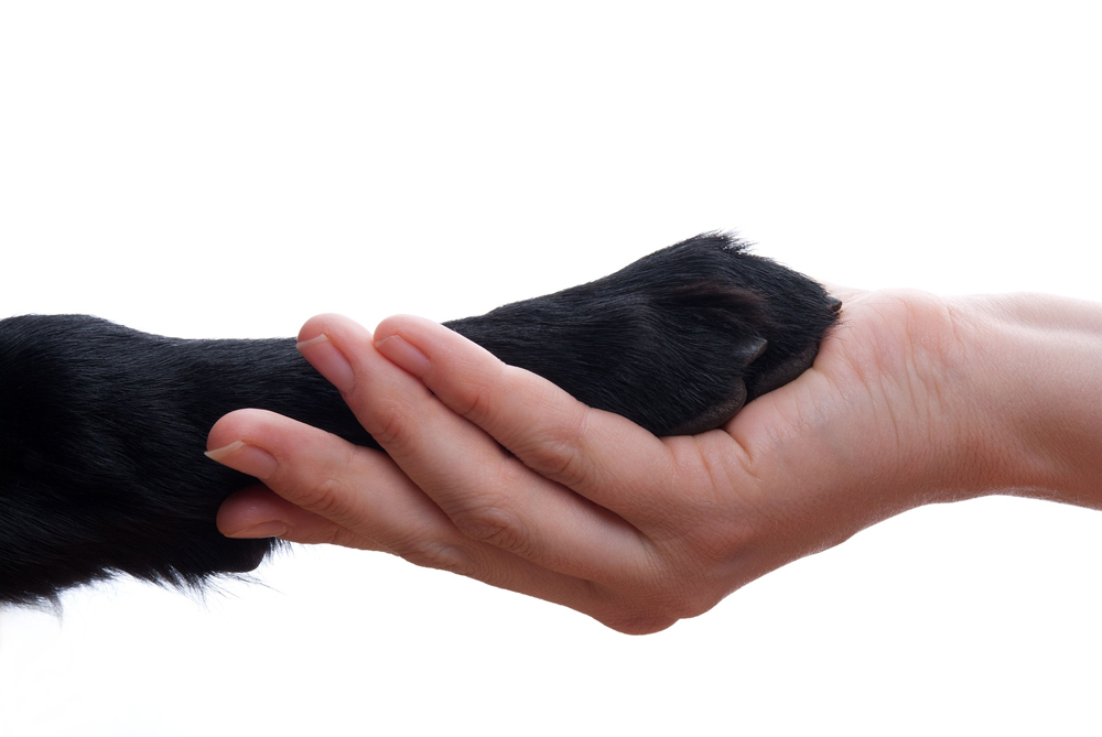 a human hand and dog paw in Laguna Hills, CA